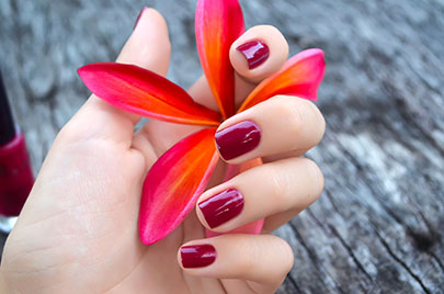 Pink plumeria flower in female hand with beautiful manicure
